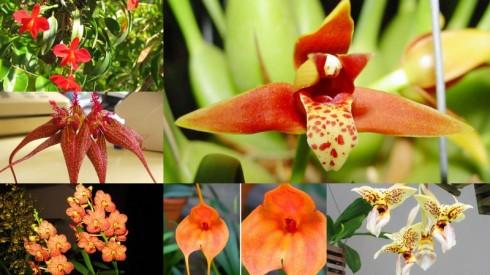 2013-07-16- Orquideas