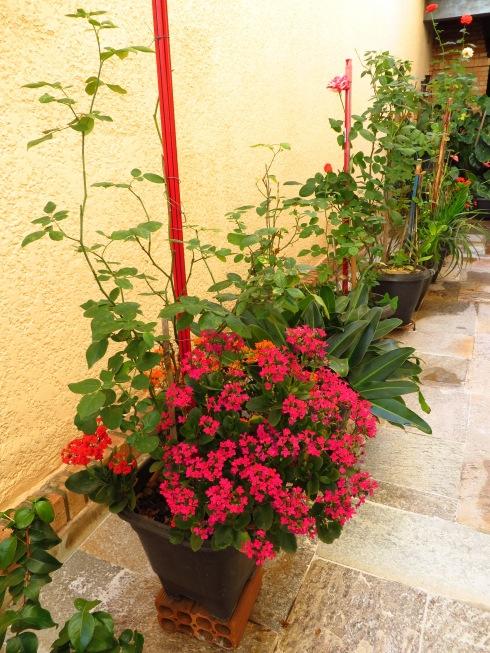 Jardim da Maria Alcione -08-julho-2013 025
