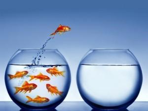 peixes-no-aquario-1300149492-700x525